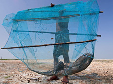 Invasive cat fish.jpg