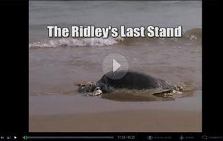 Ridleys last stand.jpg
