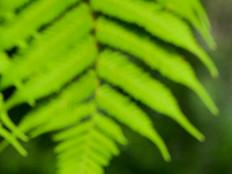 Sapling and tree fern.jpg