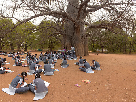Learning under a tree.jpg