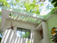 Spider's point of view.jpg