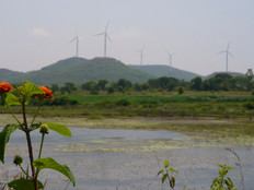 Wetland and windmill.jpg