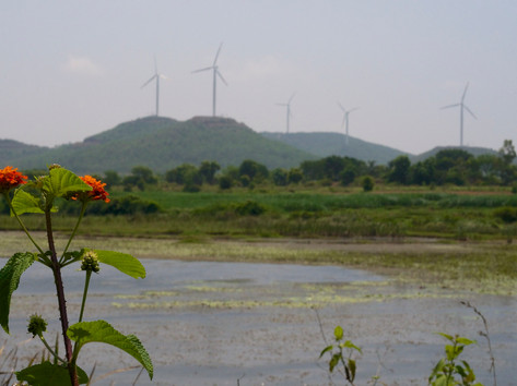 Wetland and windmill.jpg