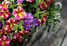 Flower Basket Plants.jpg