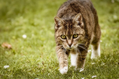 cat-5282680_1280.jpg