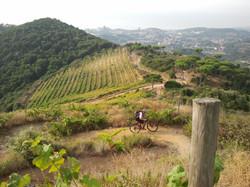 Alella vineyards