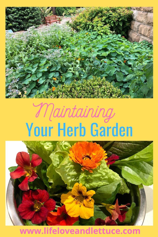 Herb Garden Maintenance www.lifeloveandlettuce.com