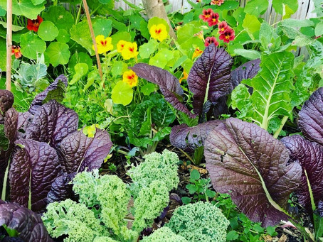 The beginners guide to no-dig vegetable gardening