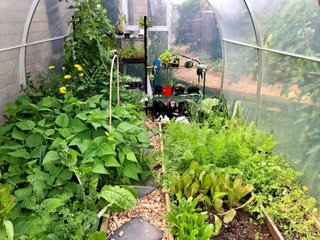 Why We Chose Our Hoop House