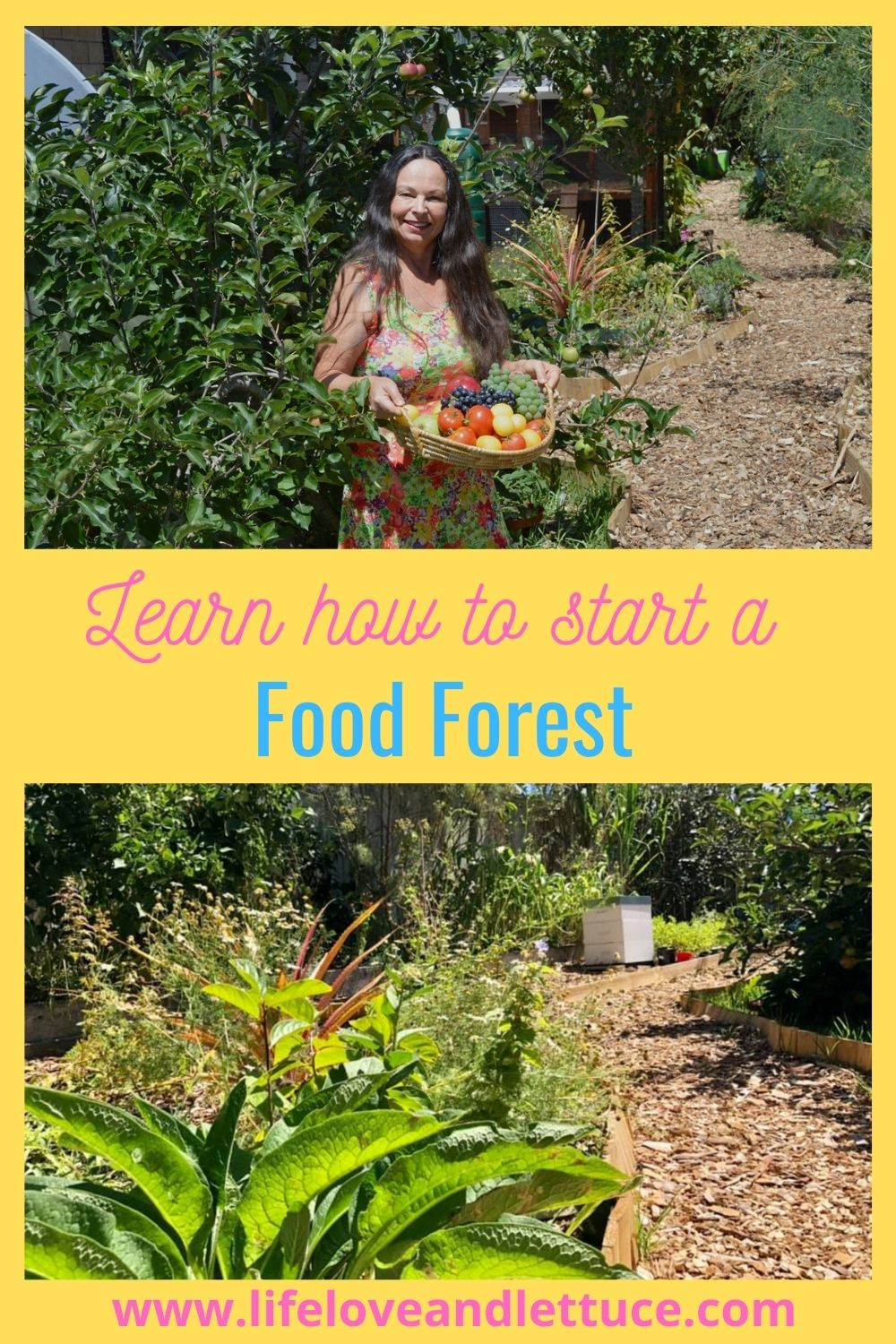 Learn how to start a food forest