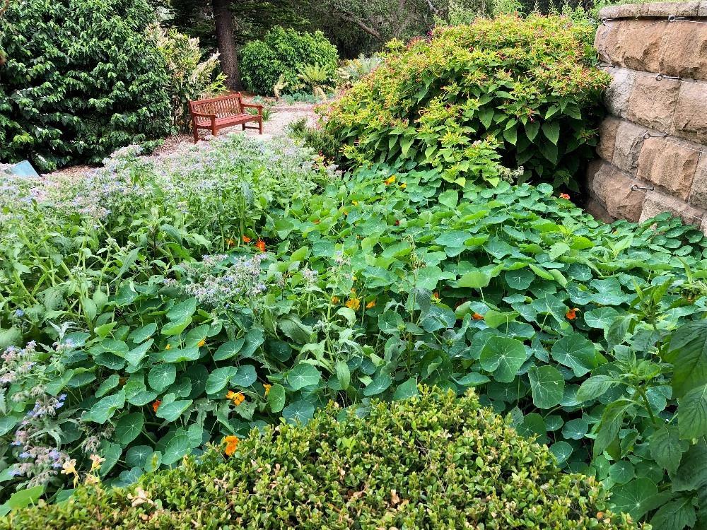 Herb Garden Care & Maintenance www.lifeloveandlettuce.com