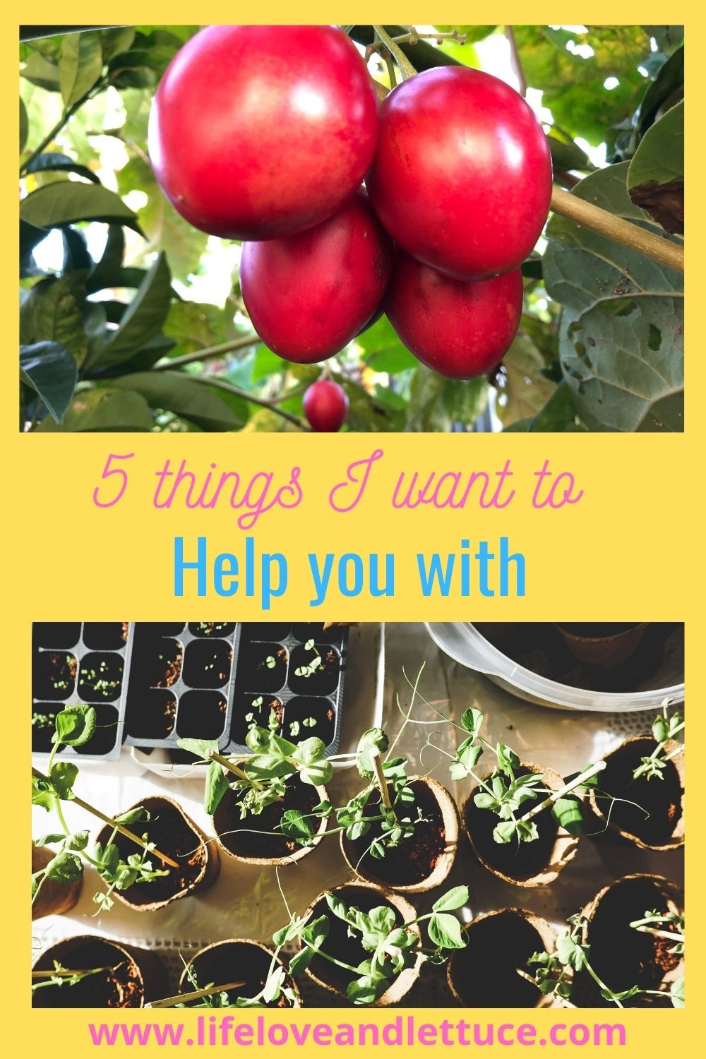 www.lifeloveandlettuce - 5 Things I want to help you with