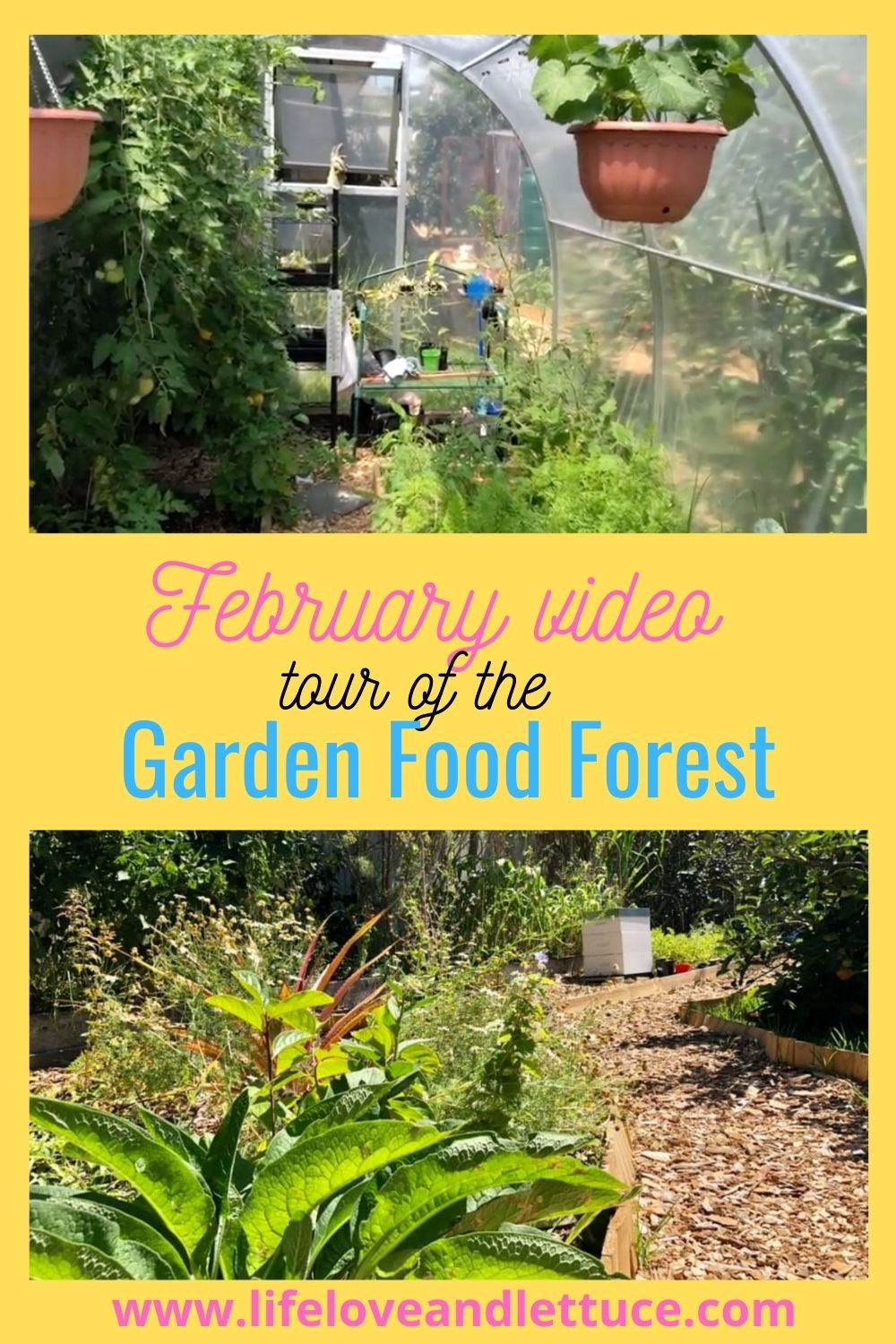 February Forest garden tour www.lifeloveandlettuce.com