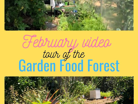 February in our Urban Garden / Food Forest