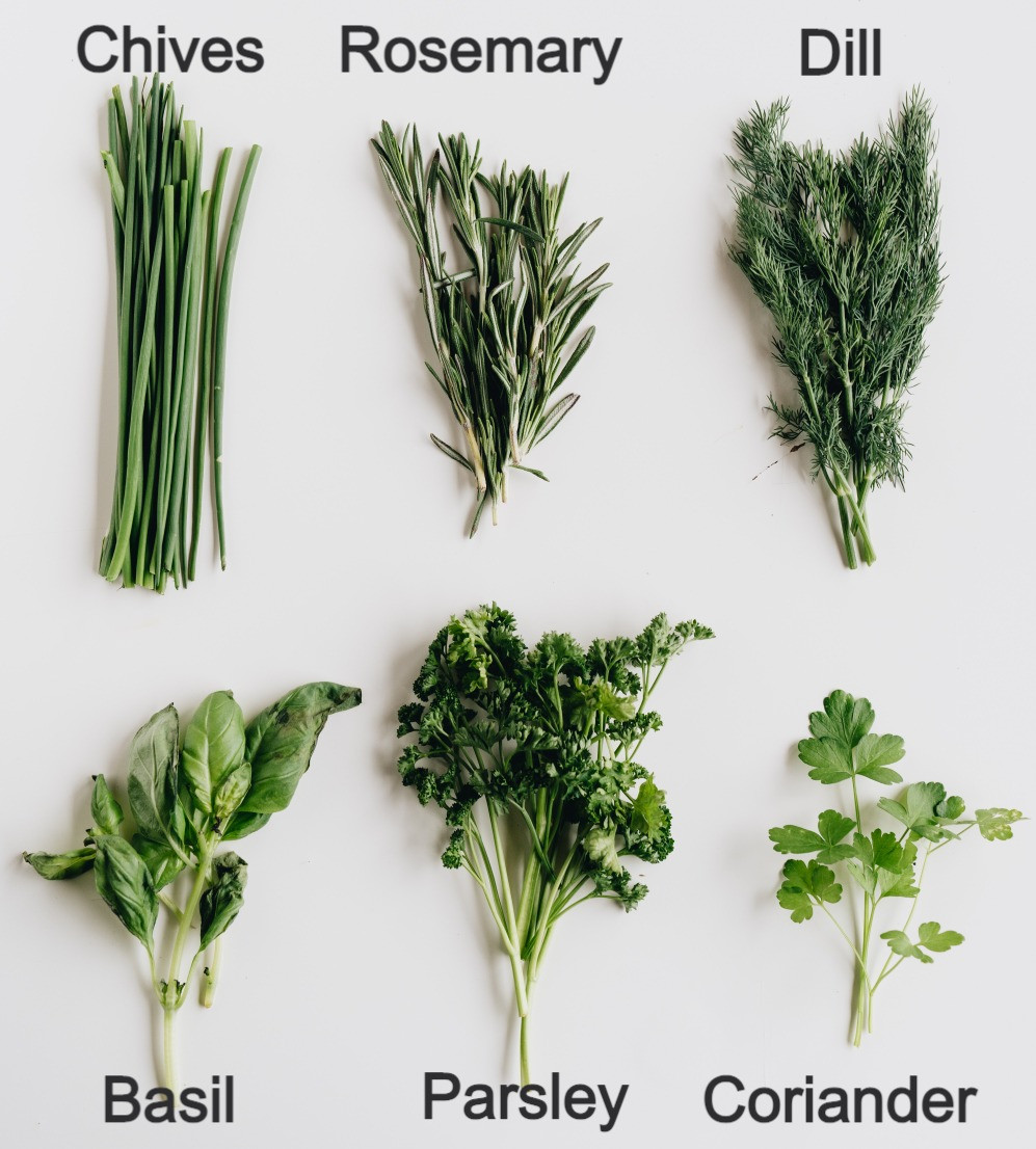Named common culinary herbs www.lifeloveandlettuce.com