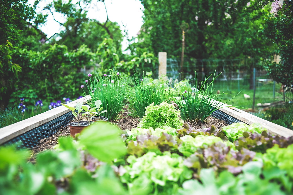 5 Things I want to help you with in your urban vegetable and fruit journey