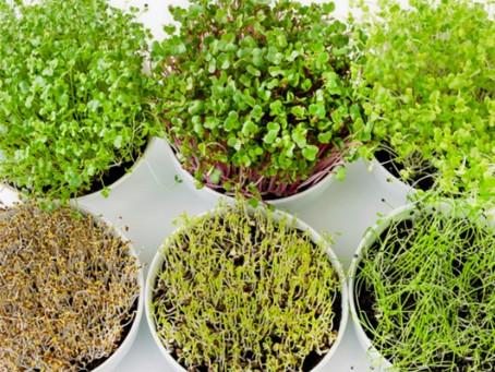 Micro Greens 101