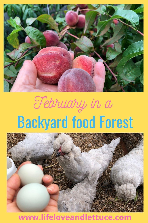 February in a backyard food forest www.lifeloveandlettuce.com