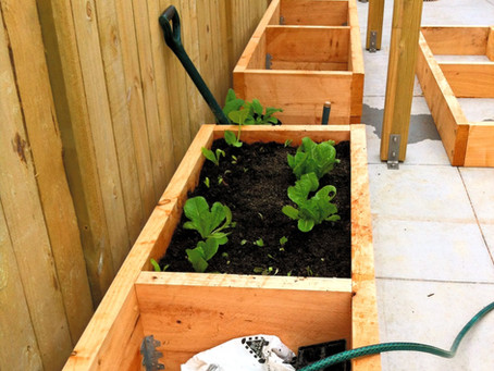 How to start a Kitchen Herb Garden