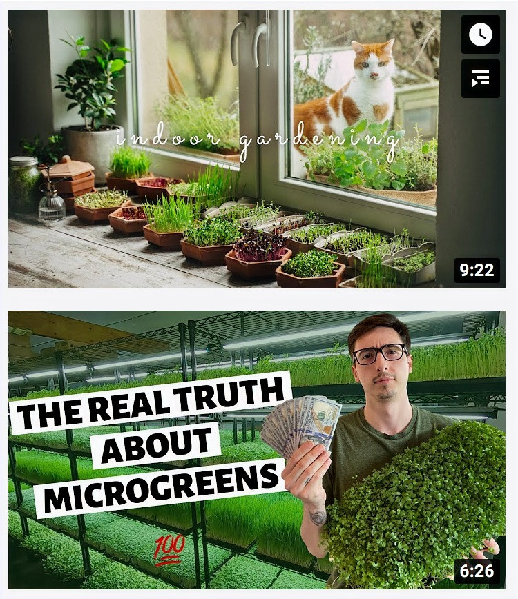 YouTube Micro green search results www.lifeloveandlettuce.com
