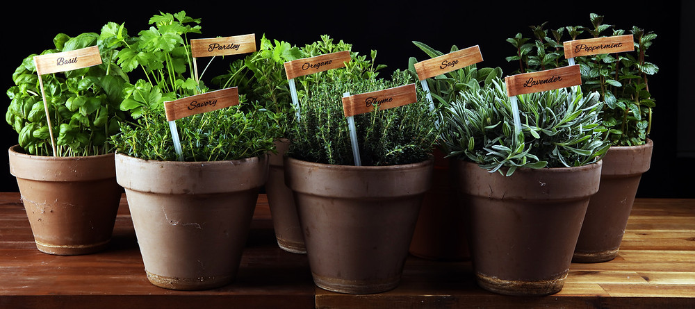 8 tips for indoor herbs www.lifeloveandlettuce.com