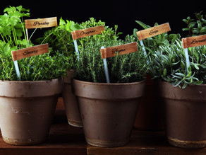 8 Tips for Growing Herbs Indoors
