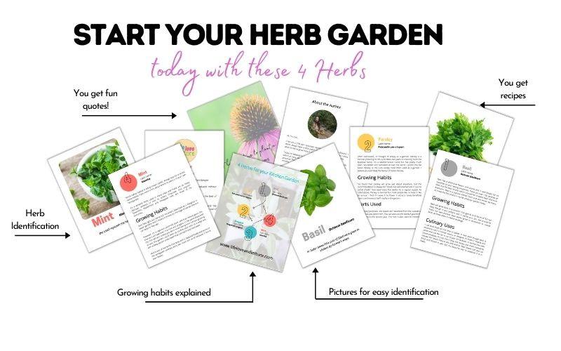 Start your kitchen herb garden www.lifeloveandlettuce.com