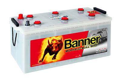 banner_buffalo_bull_shd.jpg