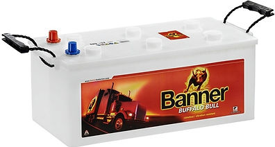 banner_buffalo_bull.jpg