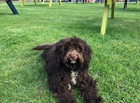 Meet Flossie - Pub Dog