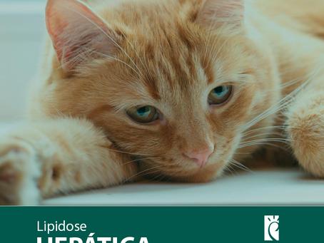 Saúde Pet: Lipidose Hepática