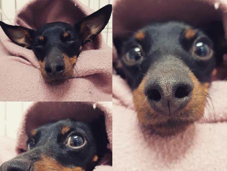 #PacientesEstima: Lilica