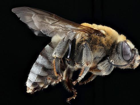 Die Münchner Polizei und die Bienen