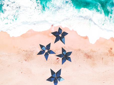 Étoiles de mer en vue !