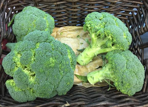 Broccoli (Italia)