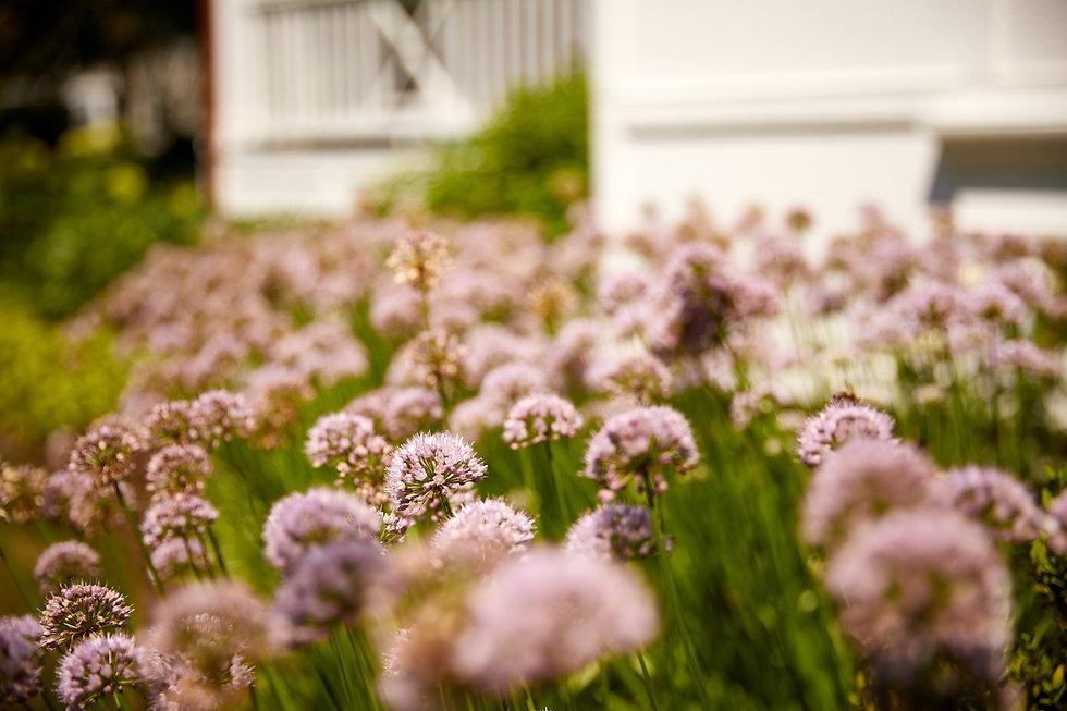 perennials-front-landscape-wheaton.jpg.j