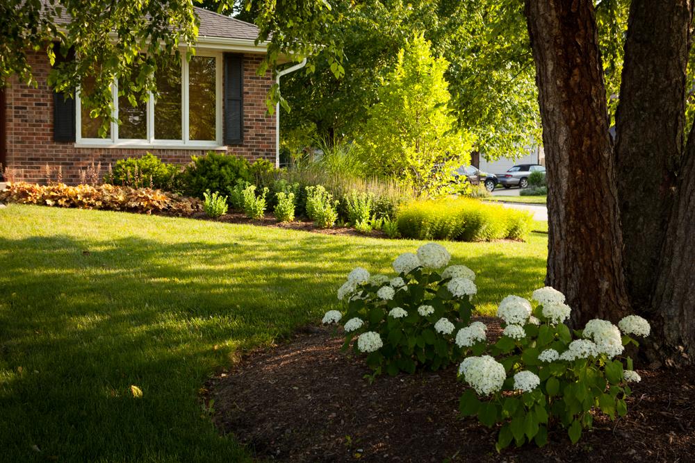 Front landscape Clarendon Hills