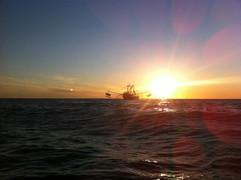 camaronero en mar.jpg