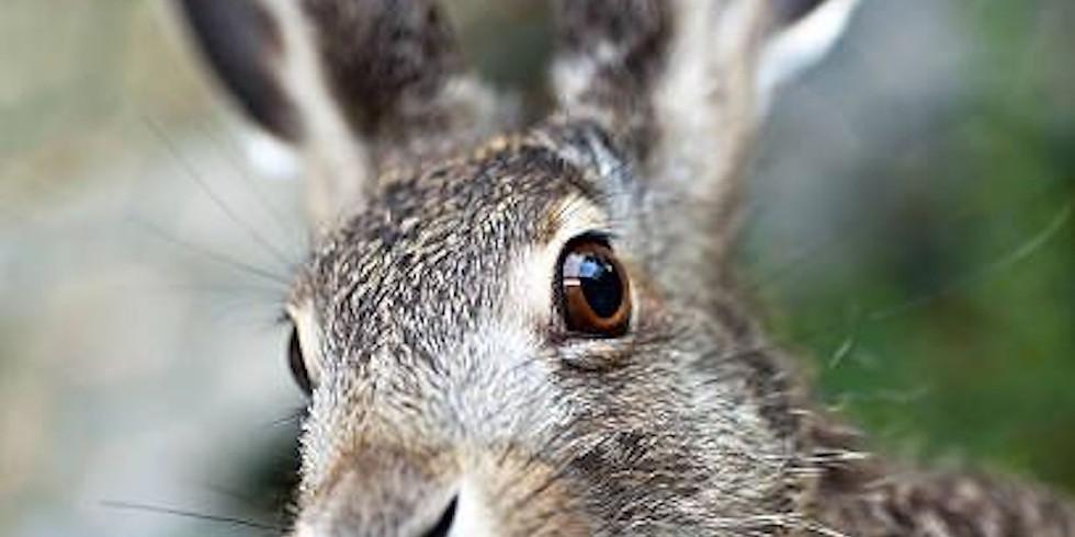 NPAC Zoom Pastel - Rabbit (Day 1)