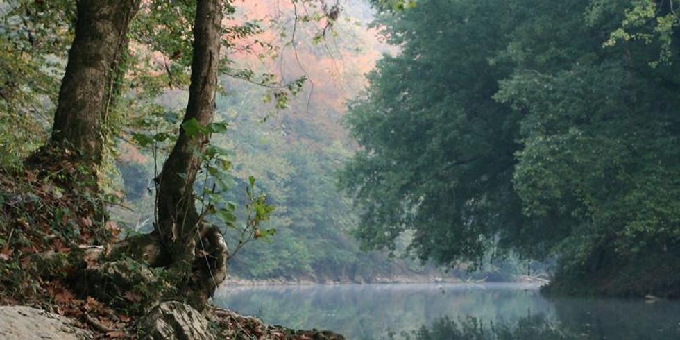 NPAC Sketch of the Week - Wooded River