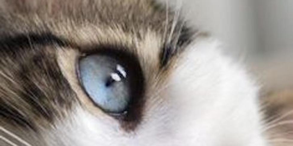 JCAC Sketch of the Week - Cat Closeup