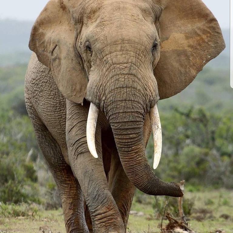 JCAC Sketch of the Week - Elephant