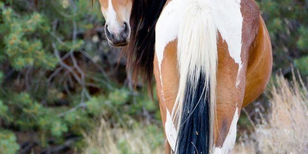 NPAC Sketch of the Week - Wild Horse