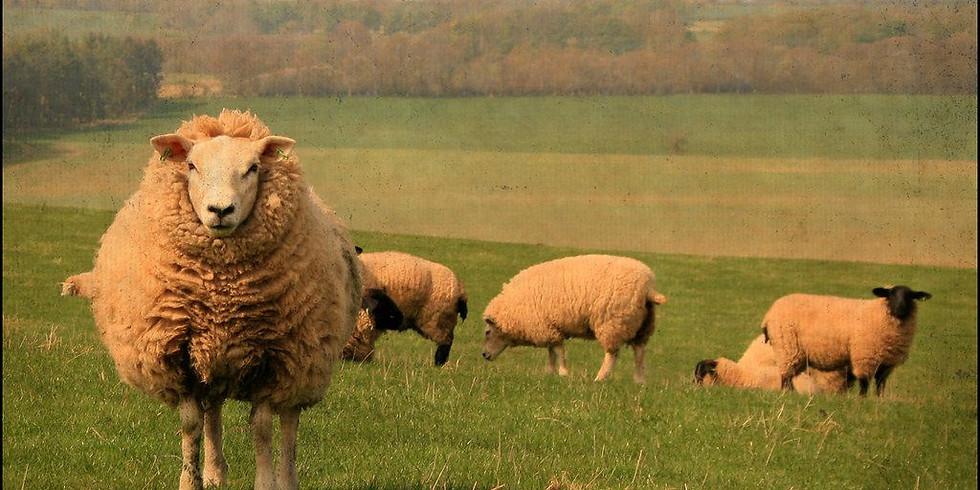 NPAC Zoom Pastel - Sheep
