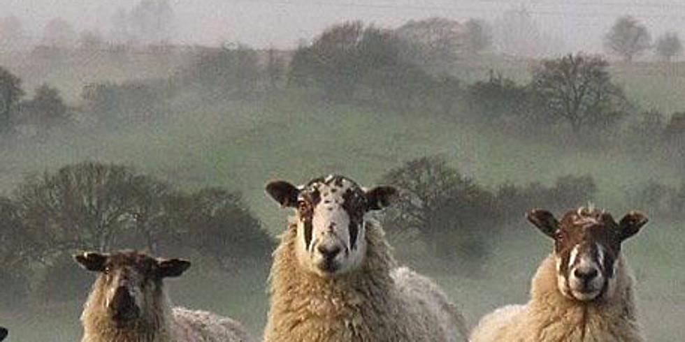 NPAC Sketch of the Week - Sheep in the Mist