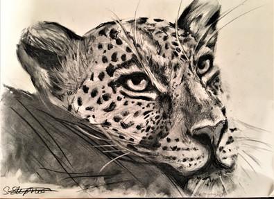 Leopard Away