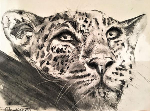 leopard2.jpg