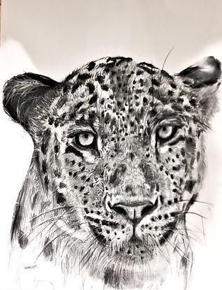leopard4.jpg
