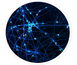 Neuron circle.png
