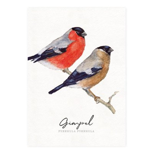 Postkarte-Gimpel